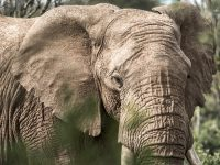 Fantastiska Kenya och Masi Mara bjuder på många upplevelser.