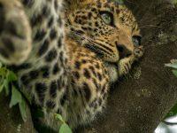 Packlista Kenya
