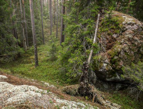 4 naturtyper och saker som du kan fotografera när det är mulet väder ute!