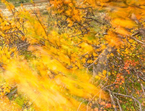 4 beteenden som ger dig bättre naturfotografier!