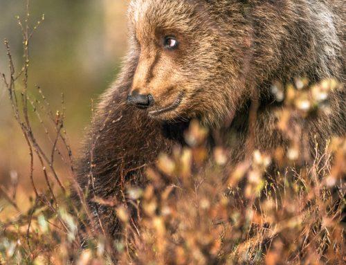 Mina 4 bästa tips när du fotograferar från ett gömsle!