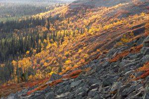 Fotografera mäktiga Njupeskär, utsikter & lavskrika på denna fotoresa till Fulufjället.