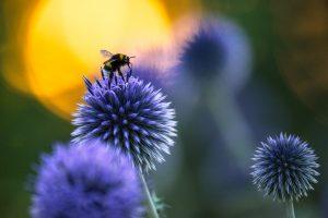 Nybörjarkurs i Naturfotografering - Naturfotokurser