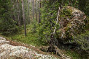 Fotografera Urskog - Naturfotokurser