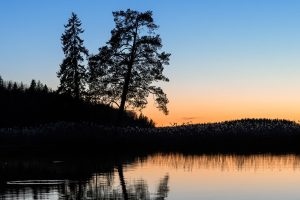 Swedens Wildlife & Nature - Naturfotokurser