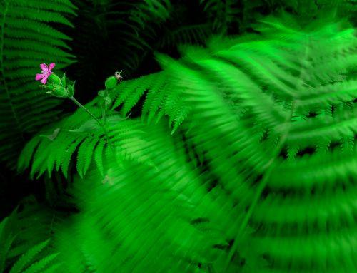 Kursbilder från en östgötsk djungel