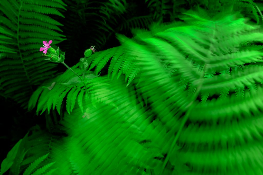Workshop i en östgötsk djungel. Bli en mer kreativ fotograf.