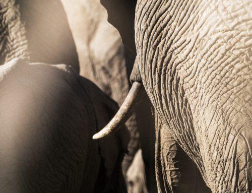 Skillnaden mellan vanlig safari och en fotosafari