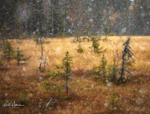 Den första snön: Deltagarnas berättelser.