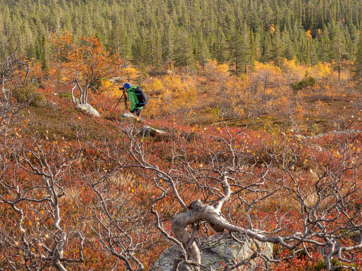 Fredrik Neregård fotograferar hösten i Fulufjället 2018 med Fröstad Naturfoto.
