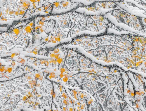 Snö & höstfärger så fantastiskt sagolikt!
