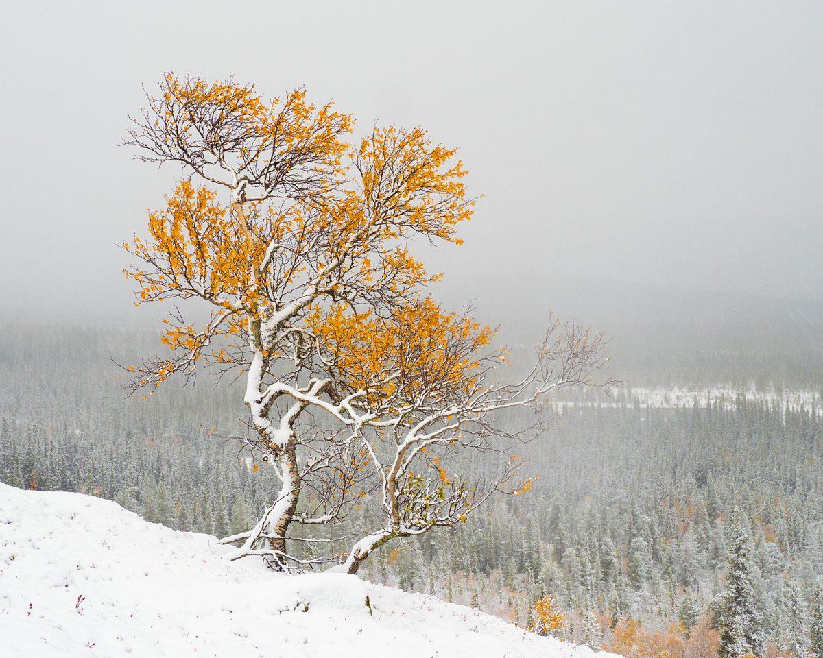 Fredrik Neregårds bild från fotoresan till Fulufjället med Fröstad Naturfoto 2018.