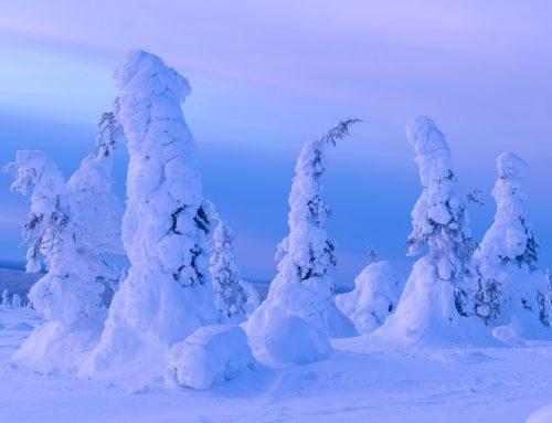 Du kan också uppleva vinterparadiset!