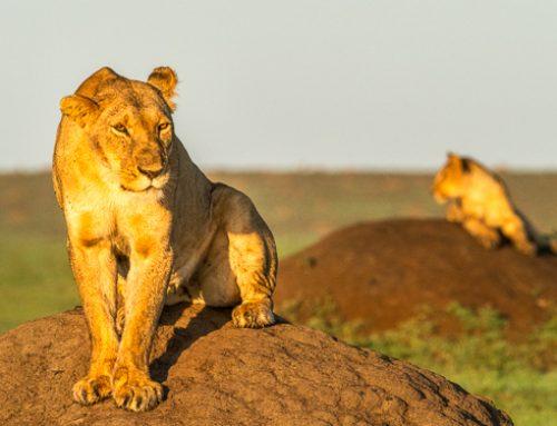 Ny omröstning visar de djur naturfotografer drömmer om att fotografera.