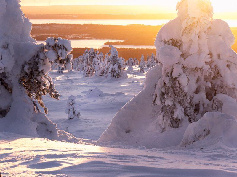 En vacker och gyllene solnedgång över Riisitunturi nationalpark.