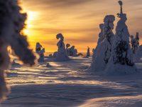 Vacker solnedgång och magiskt varmt ljus i Riisitunturi nationalpark