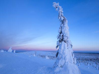 En kylig morgon med vackert klart väder och gnistrande snö i Riisitunturi nationalpark.