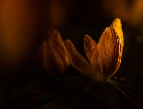 Mina tillbehör för en kreativ fotografering med blixt.