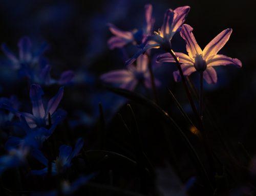 Makrotiden är nu. Hur du skapar fantastiska bilder på blommor.