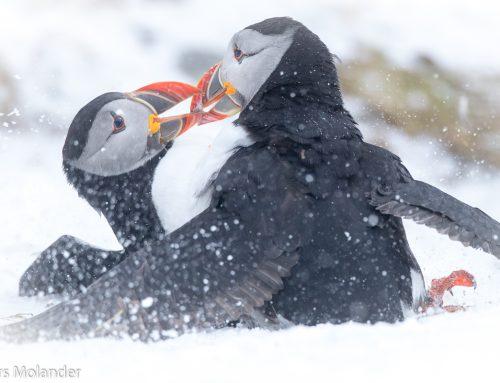 Kolla in de här bilderna från Arktiska Varanger i Nordnorge.