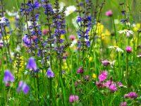 Blomsteräng i Slovenien.