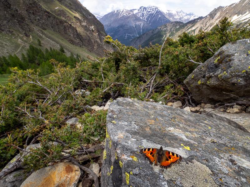 Fjärilsvingar med utsikt_Italien