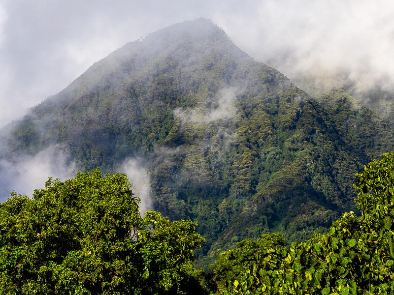 De dimhöljda bergen. Fröstad Naturfoto. Uganda.