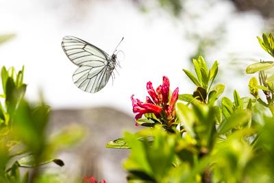 Fjäril- & makroparadiset i norra Italien.