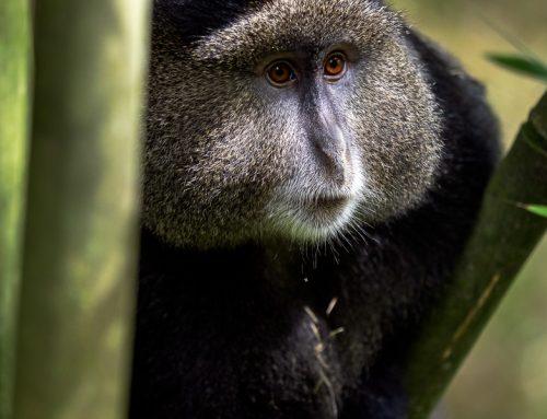 Flera nya foton för dig som vill fotografera i Uganda.