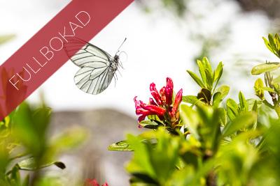 Fjäril & makroparadiset i norra Italien
