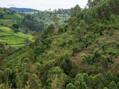 Odlingsmark. Uganda.
