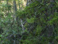 Urskog. Finland.