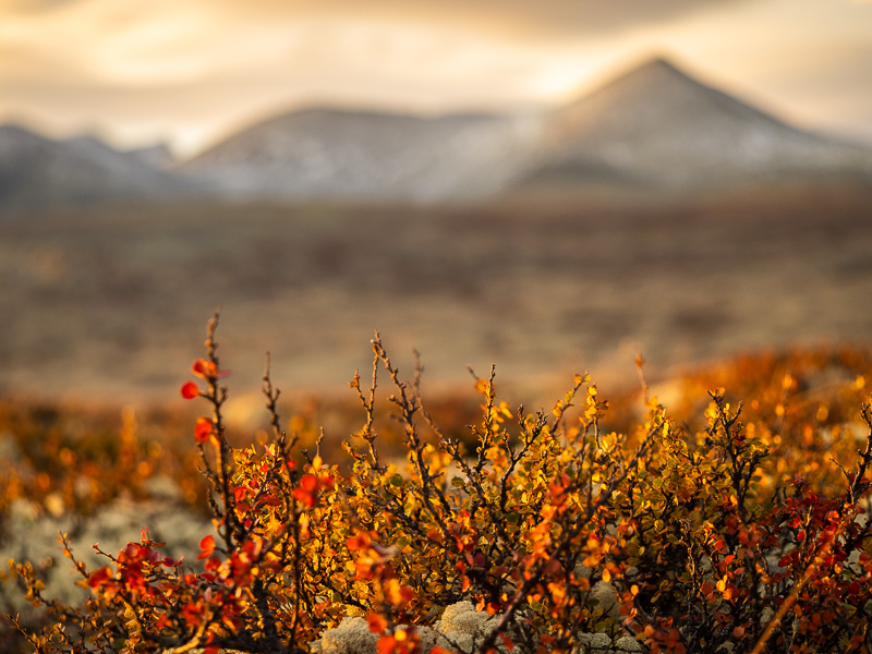 Färger och djup i Rondane.