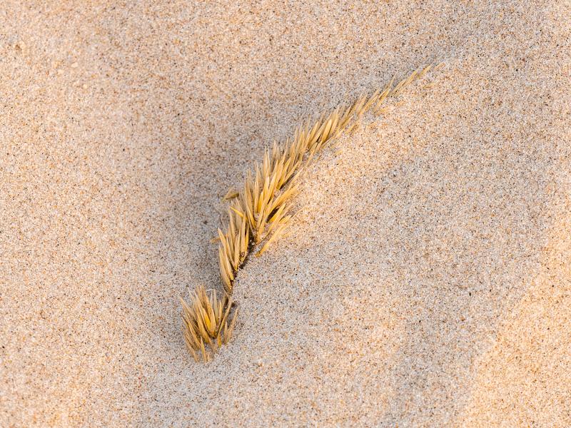 Strå i sandstranden.
