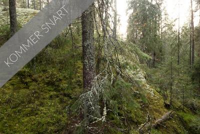 Trollskog och gölar i Tivedens nationalpark