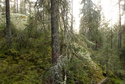 Trollskog & gölar i Tivedens nationalpark.