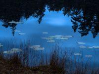 Trollskog & Gölar i Tivedens nationalpark 2020