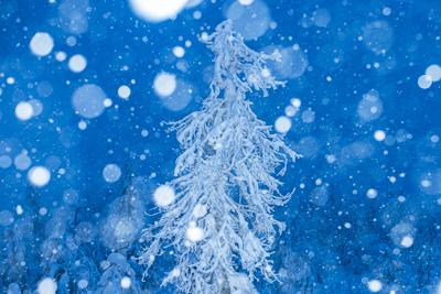 Ett magiskt vinterparadis i östra Finland.