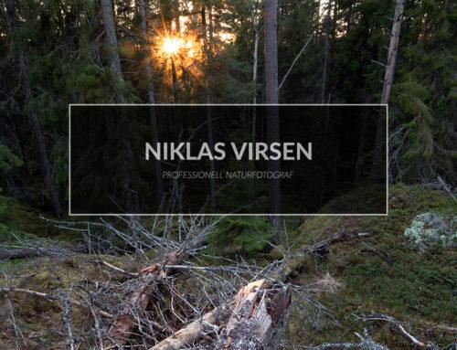 Jag fotograferar i gammelskogen – få ordning på kaoset.