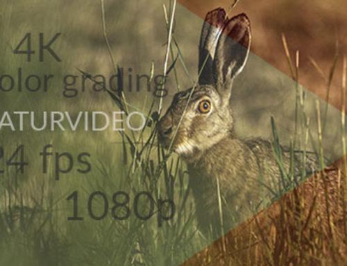Ny kurs för dig som vill lära dig filma naturvideo.