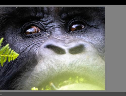 Lightroomkurs för naturfotografer på distans – en fyra timmar lång videokurs.