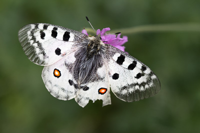 Fjärilparadiset i norra Italien.