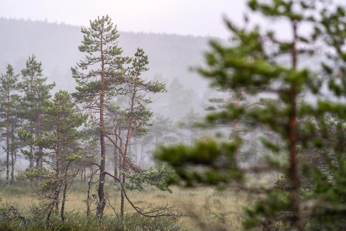 Knuthöjdsmossen landskap.