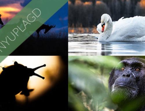 Nya platser på Magiska möten i naturen – I väntan på nya äventyr.