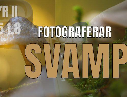 Fotograferar svamp – Mina bästa råd!