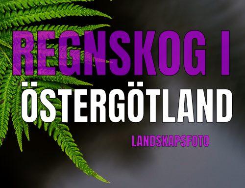 Regnskog i Östergötland –  Landskapsfoto.