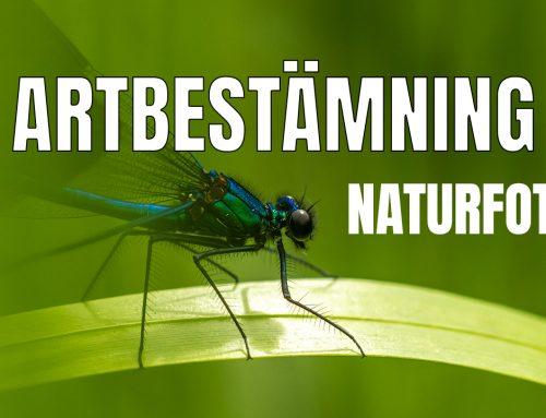 En viktig del av naturfotografin är artbestämning.